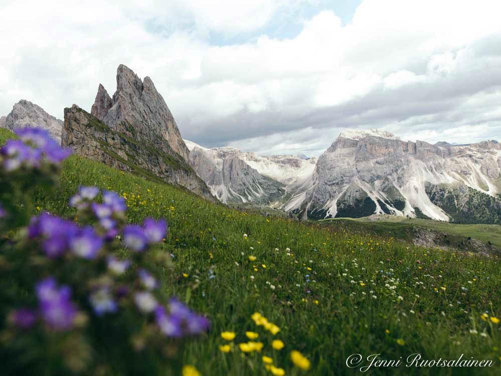 Kukkia Dolomiiteilla heinäkuussa, ilmastopäivät